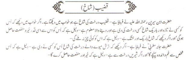 khwab nama khwab main Qazeeb shakh dekhne ki tabeer